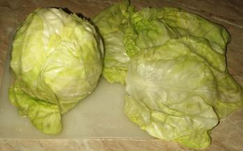 листы молодой капусты